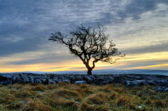 Twistleton tree and sunset
